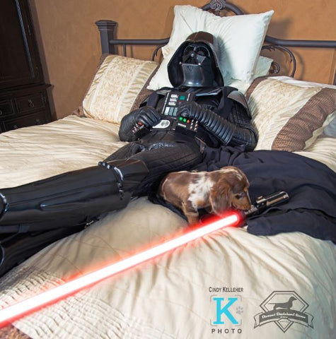 cuddles with darth daddy doxie