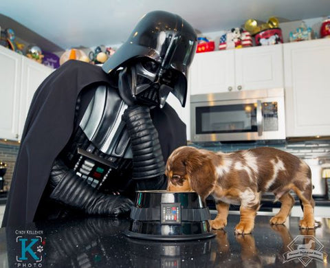 daddy vader feeding doxie may the 4th