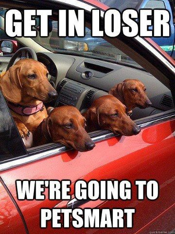 wiener dog humor - going to petsmart loser