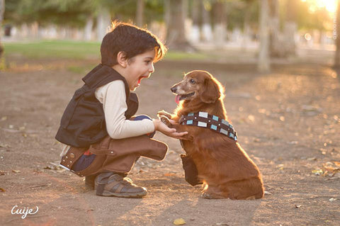Star Wars Star Weens Chewy and Han Solo Dachsund