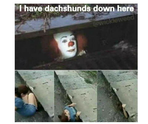 Wiener dog memes - pennywise the clown