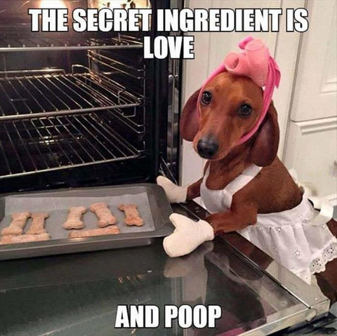 Dachshund Memes And Wiener Dog Humor The Smoothe Store