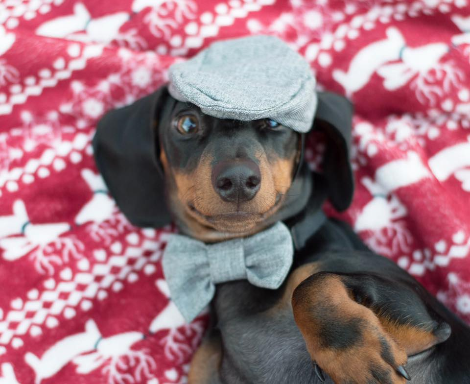 Dachshund Holiday Blankets, The Smoothe Store