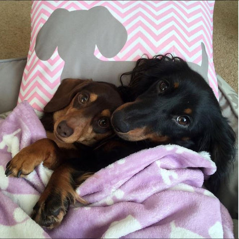 Pink & Gray Chevron Dachshund Pillow - The Smoothe Store - 4