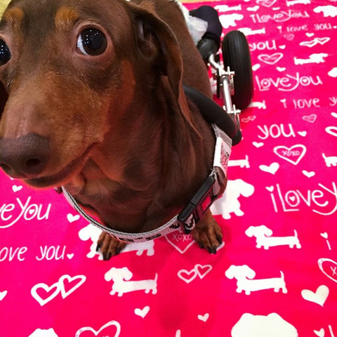 I Love You and Hearts Dachshund Fleece Blanket, The Smoothe Store