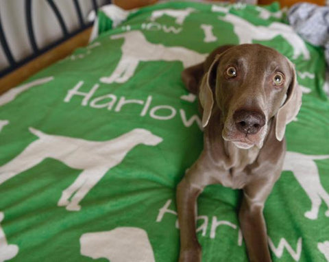 Harlow & Sage with Personalized blanket