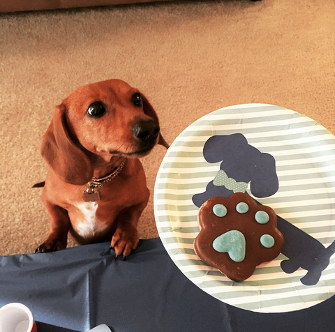 Dachshund Party Paper Plates with Blue Bow Ties, The Smoothe Store