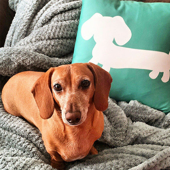 Dachshund Pillows and Home Stuff