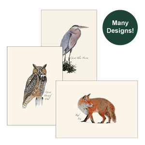 Illustrated 8-pack Boxed Notecard Sets