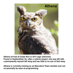 Load image into Gallery viewer, Great Horned Owl Stacking Mug Set
