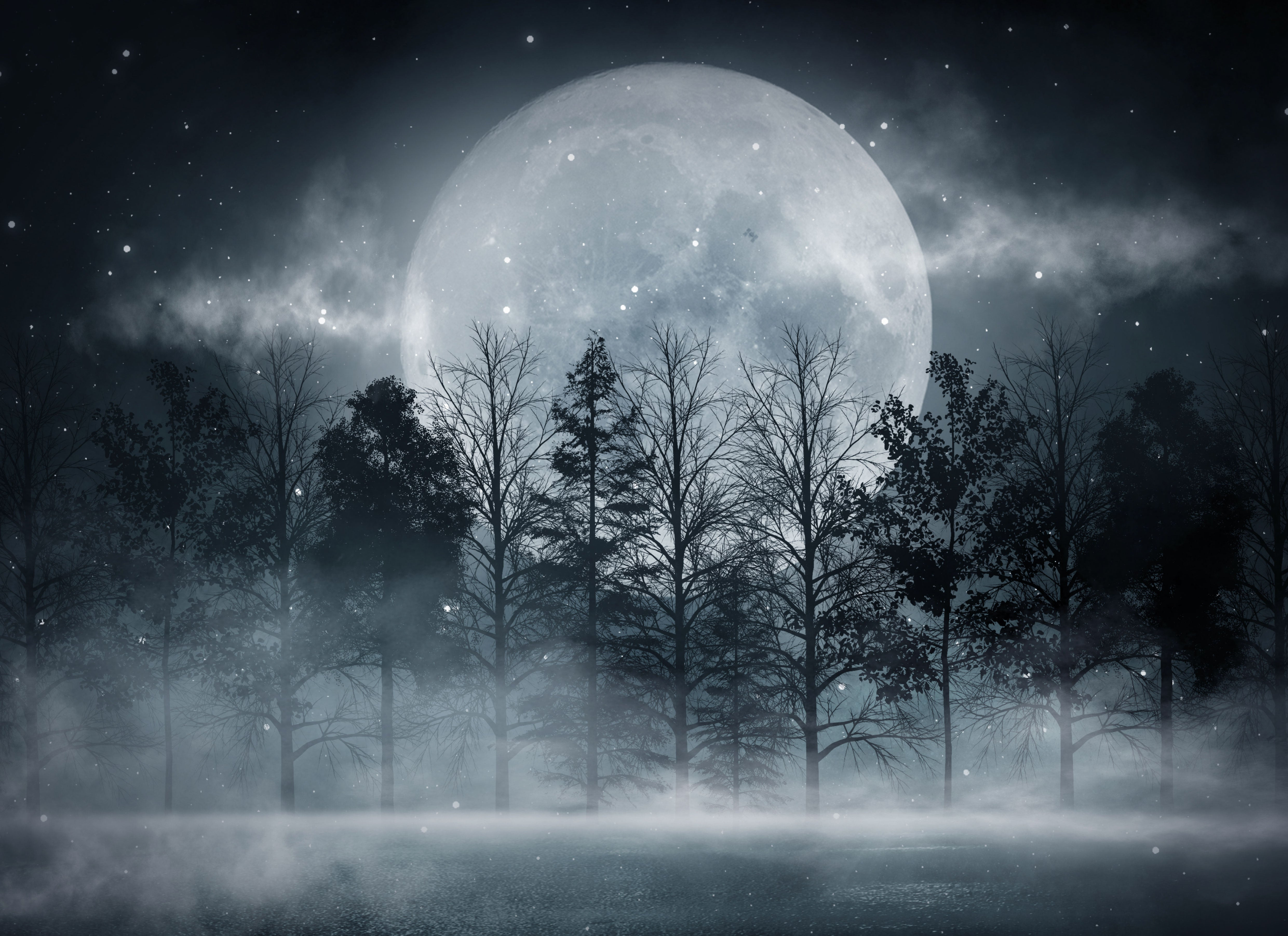 Forest In The Moonlight