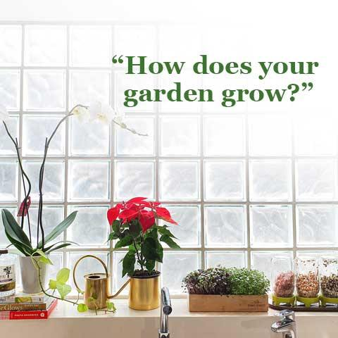 Grow-It-Yourself: How to create your own sprouts and microgreens kitchen garden
