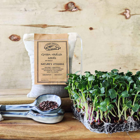 micro green green radish sprouting seeds - Microgreens