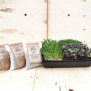large microgreens tray with 3 seeds