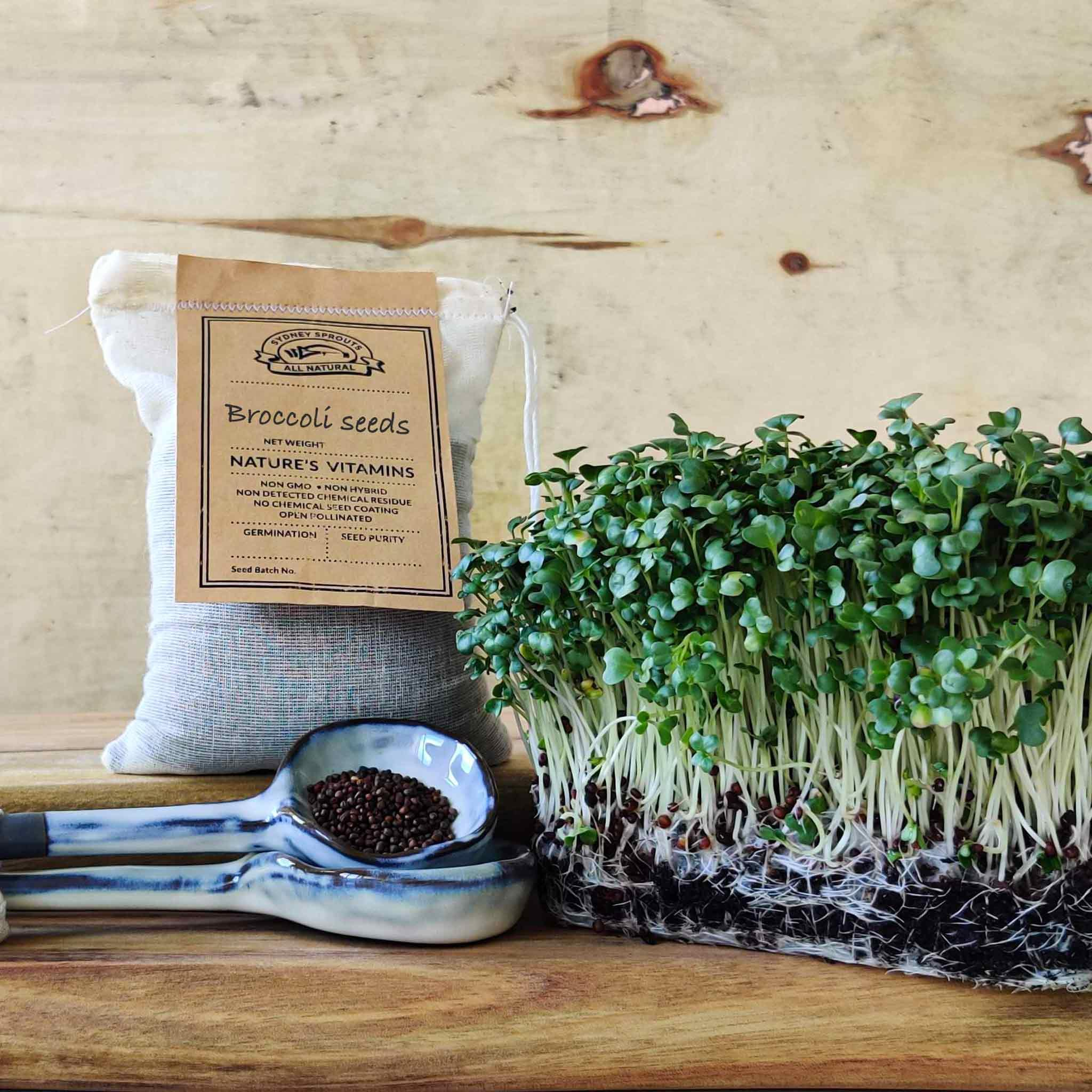 micro green Broccoli sprouting seeds - Microgreens