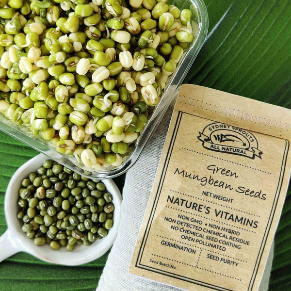 mung bean sprouting seeds