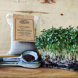 kale sprouting seeds - microgreens