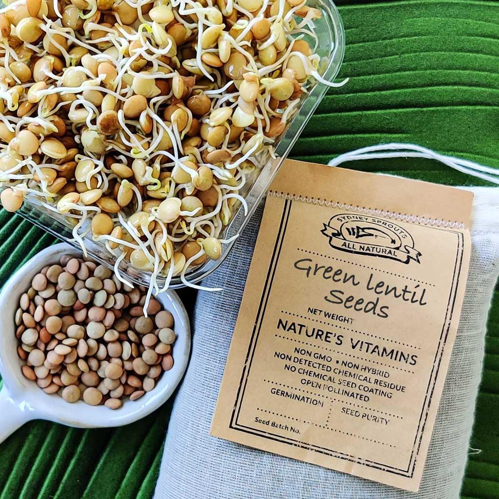 green lentil sprouting seeds