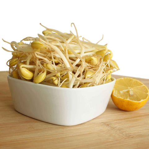 Soya Beans Sprouts (packet)