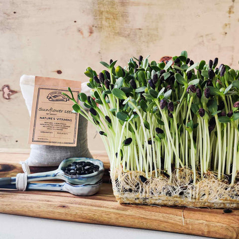 Micro green Sunflower sprouting seeds - Microgreens