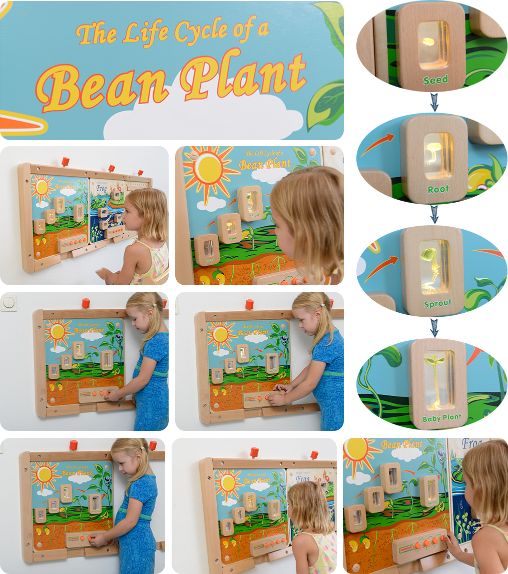 A learning activity focuses on different developmental stages of a bean plant. The board contains real life specimens encapsulated in clear acrylic blocks which allow children to closely look into details. Life stages of most plants starting with a seed and ending with a grown plant can be seen and discussed with the added benefit of switches to light up each one in turn. Once lit-up, the specimens reveal all of their hidden secrets and children will be drawn in to examine them in greater detail.  As well as the visual brilliance of these boards, children will also benefit from the rich words and language that surrounds these wonderous timelines.  Batteries are NOT included.