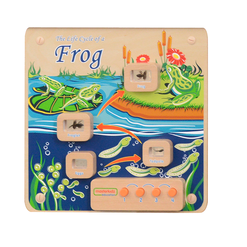 Light-Up Frog Life Cycle Stages Panel