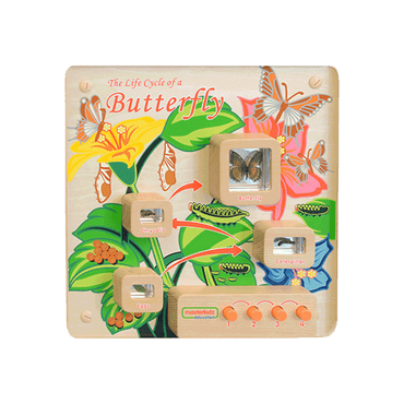 Light-Up Butterfly Life Cycle Stages Panel