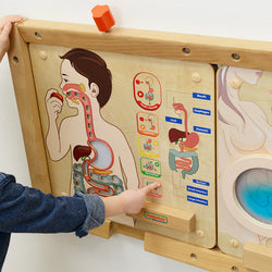 Digestive System Learning Board Play Teaching Aid