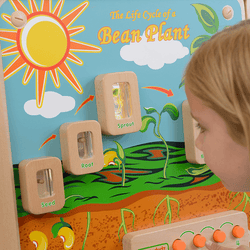 Light-Up Plant Life Cycle Stages Panel