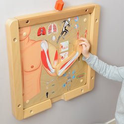Muscular and Skeletal Systems Learning Board Play Teaching Aids | Masterkidz