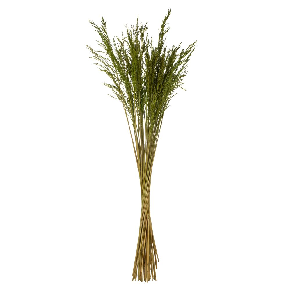 GREEN CONGO GRASS 36""