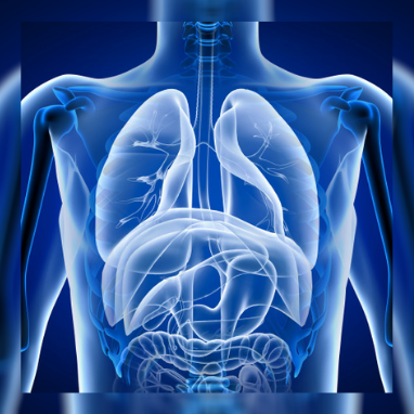 Seven Ways to Keep Your Respiratory System Healthy