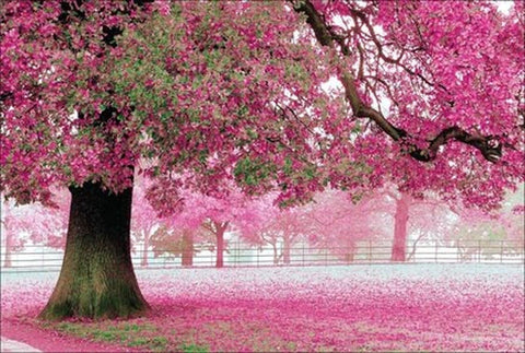 1000 Piece Pink Trees Super Beautiful Puzzles Challenging