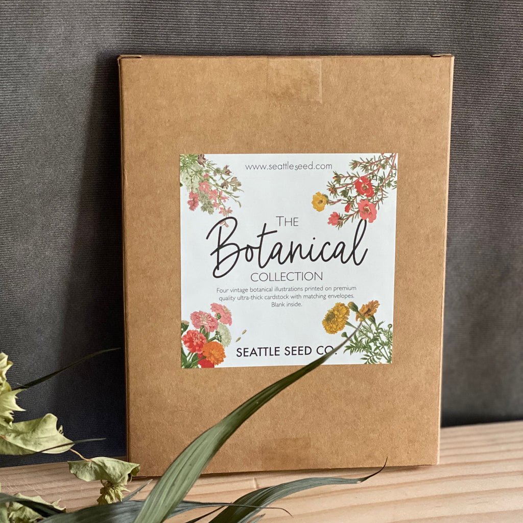Botanical Print Cards