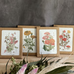 Botanical Greeting Cards (4 Pack)