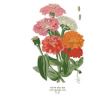 Botanical Greeting Cards