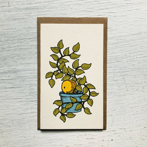 snail plant mini card