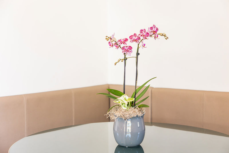 Orchid Centerpiece for Christmas