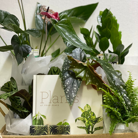 Indoor Plant Hamper