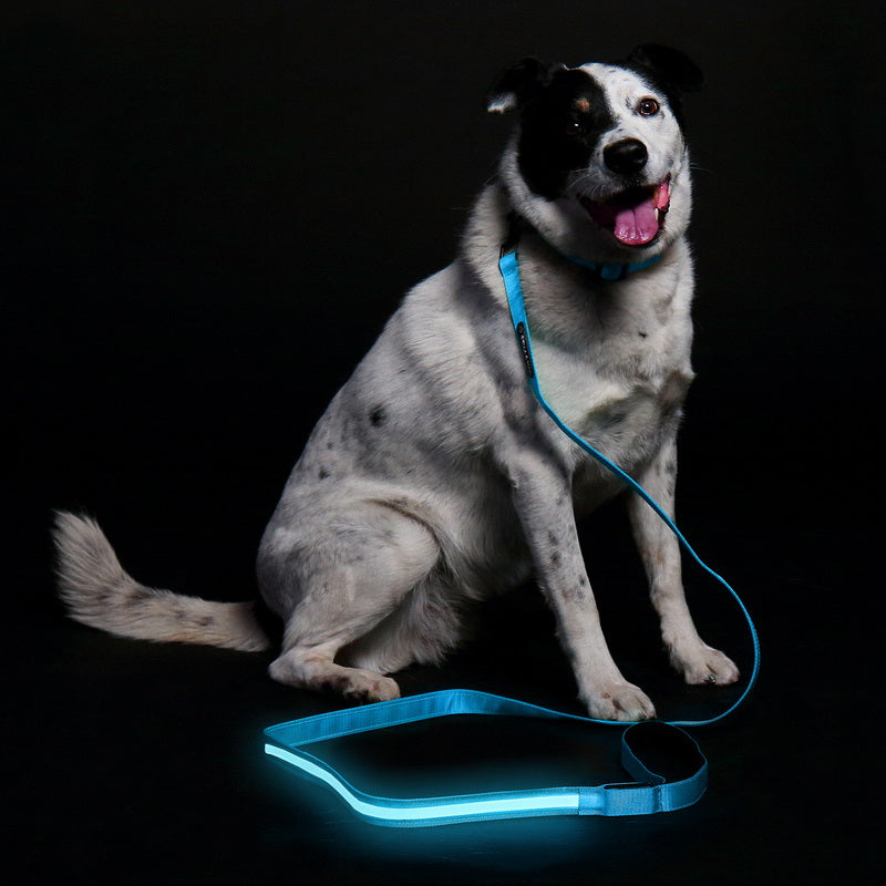 LED Leash - Blue