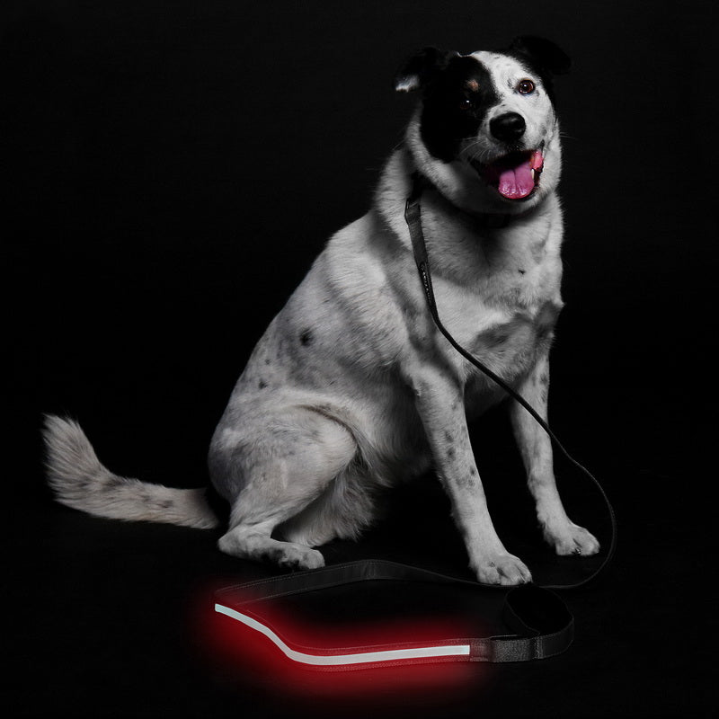 LED Leash - Black