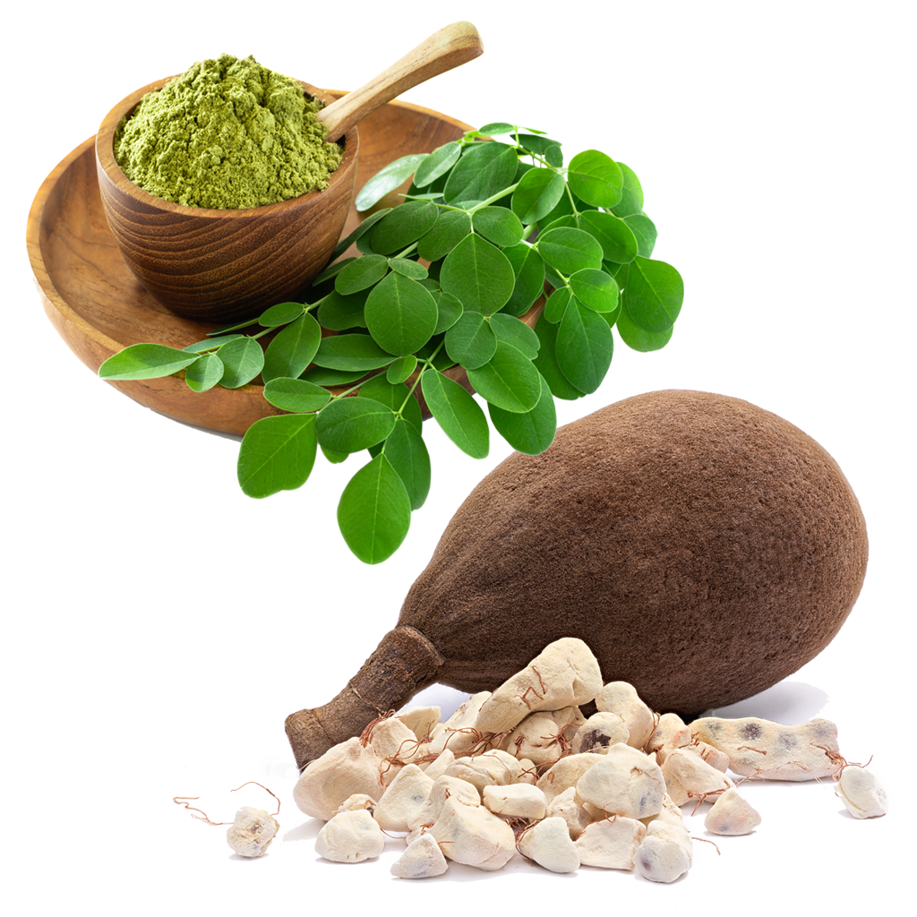 What does Moringa and Baobab Look like?