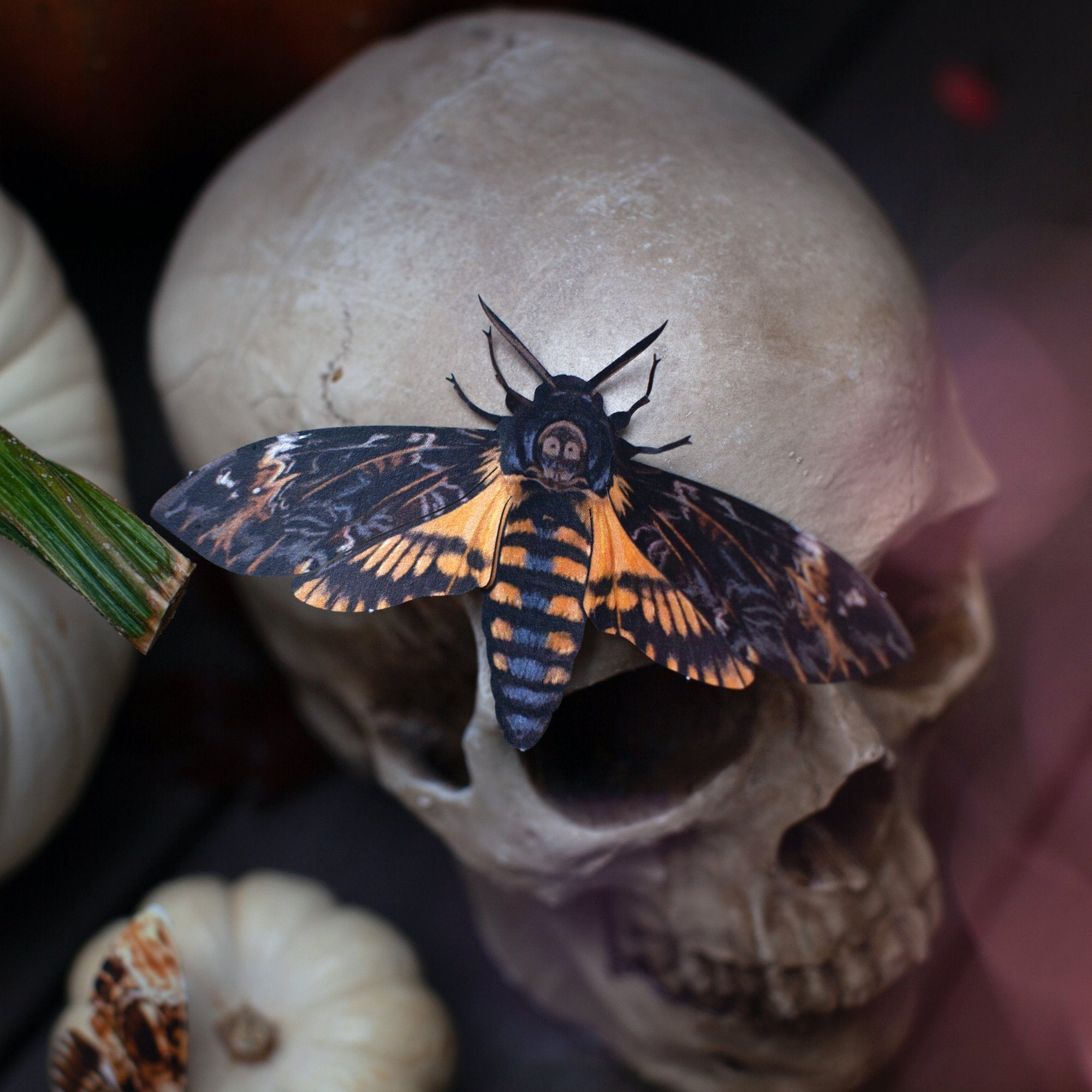 Meet the Moth: Death's-Head Hawkmoth