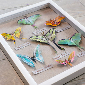 DIY Shadowbox Craft Project
