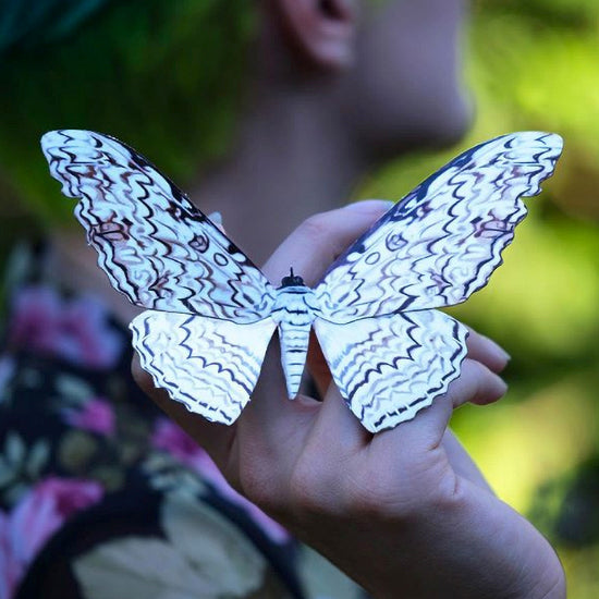 Meet the Moth: White Witch Moth