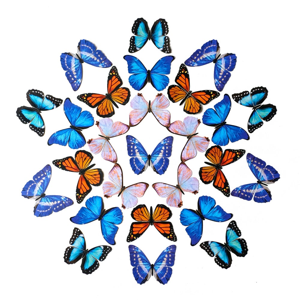 The Morpho & Monarch Butterfly Multi-Pack