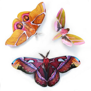 'Amber' Atlas Moth Set Artist Wholesale
