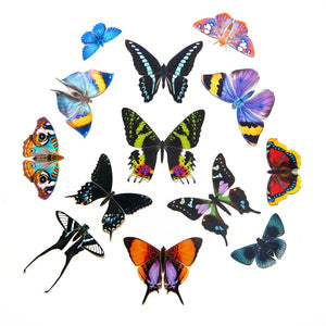 "The Butterfly Collection 1 ""In the Garden of Earthly Delights"""