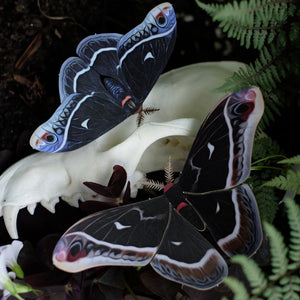 'Winter' Calleta Moth Set Artist Wholesale