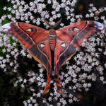 Load image into Gallery viewer, 'Fire' Hercules Moth Set Artist Wholesale